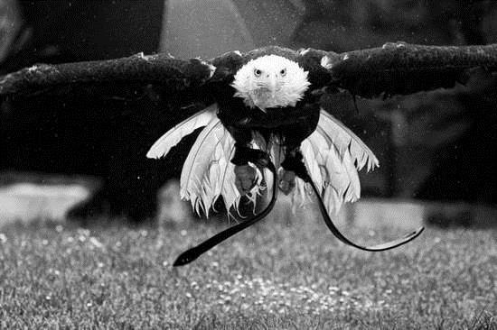 德工程师做鹰眼3D打印镜头 可高空看清蚂蚁